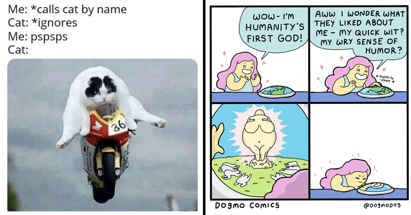Funny random memes, dank memes, stupid memes, random memes, funny comics, funny tweets, twitter | calls cat by name Cat ignores pspsps Cat: riding a motorcycle | WOW- HUMANITY'S FIRST GOD AWW WONDER THEY LIKED ABOUT MY QUICK WIT? MY WRY SENSE HUMOR? PINCH 200m DOgmo COICS @D0gmoDo9