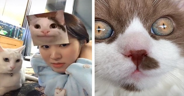 cats instagram videos funny animals cute aww lol | woman using an instagram filter that makes viral cat memes run on top of her head while sitting next to her own cat | closeup zoom in yellow green eyes of a cat with pinprick pupils