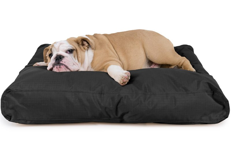 Top Durable Outdoor Dog Beds Of 2020