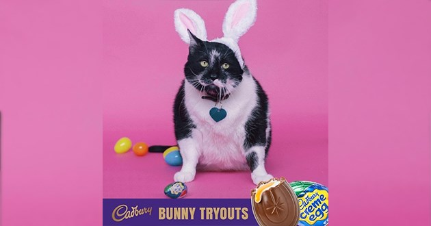 cats cadbury bunny finalists animals vote | Cadbury BUNNY TRYOUTS Cadbury creme egg cute black and white chonk chubby cat wearing fluffy bunny ears and a heart shaped tag on its collar surrounded by colorful Easter eggs