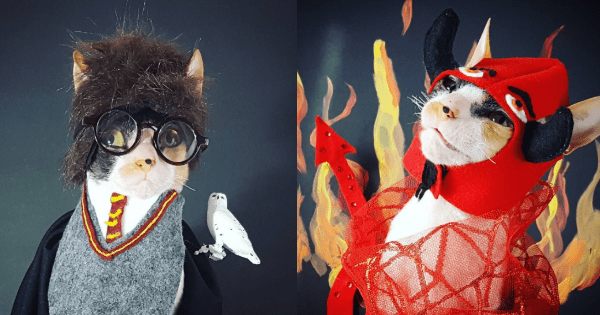 costume halloween cornish rex Cats - 1079813