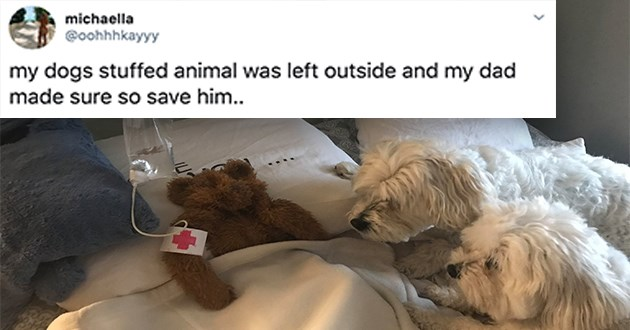 dog stuffed animal tweets dogs animals cute aww twitter funny lol wholesome dad | tweet by michaella @oohhhkayyy my dogs stuffed animal left outside and my dad made sure so save him | pic of two dogs watching over a teddy bear in a pretend hospital bed