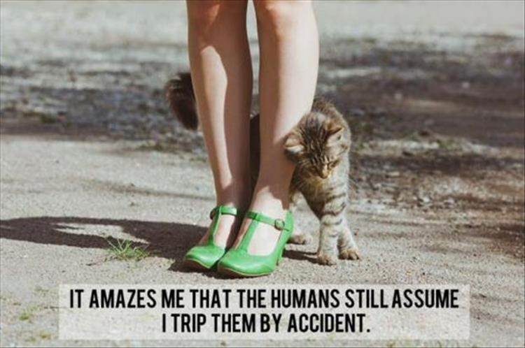 Funny shower thoughts of a cat | AMAZES HUMANS STILL ASSUME TRIP THEM BY ACCIDENT | cat rubbing against a woman's legs