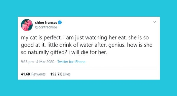 Funniest animal tweets | chloe frances @contrachloe my cat is perfect am just watching her eat. she is so good at little drink water after. genius is she so naturally gifted will die her.