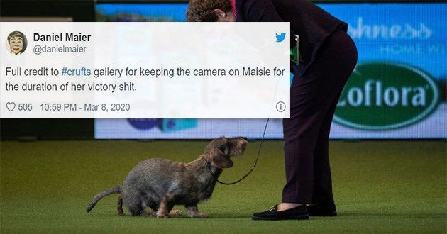 dog poo poop crufts funny tweets twitter reactions animals doggo shit dump lol | tweet by Daniel Maier @danielmaier Full credit crufts gallery keeping camera on Maisie duration her victory shit. funny dachshund dog pooping live on tv