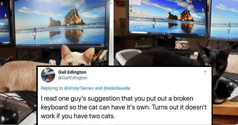 Experts share their tips for working from home | tweet by Gail Edington @GailEdington Replying AhdarTaknev and @elakdawalla read one guy's suggestion put out broken keyboard so cat can have 's own. Turns out doesn't work if have two cats. black cat and orange cat sitting on two different keyboards