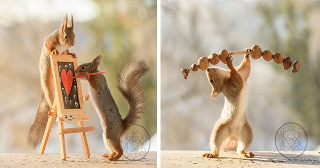 squirrels photography amazing animals whimsical art beautiful red squirrel | funny photo of a squirrel painting a heart on a canvas using a tiny easel while another squirrel climbs it to watch | silly amusing pic of a squirrel weightlifting holding above its head barbell made of branch with acorns on each side