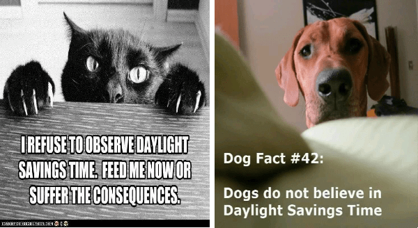 Memes about pets and daylight saving | cat clawing its way onto a table: REFUSE OBSERVE DAYLIGHT SAVINGS TIME. FEED ME NOW OR SUFFER CONSEQUENCES | Dog Fact #42: Dogs do not believe Daylight Savings Time