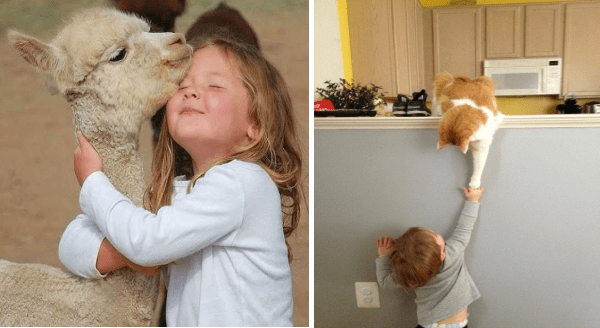 Amazing animal photos | young girl eyes closed hugging the neck of a baby llama both looking very content | small child reaching up a half wall to touch the paw of a cat sitting on top of it