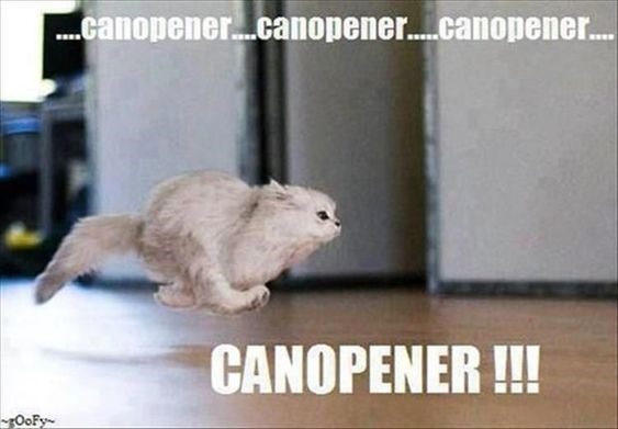 Memes about cats and can opening | grey fluffy white cats zooming flying running fast at the sound of a can opener canopener canopener canopener CANOPENER