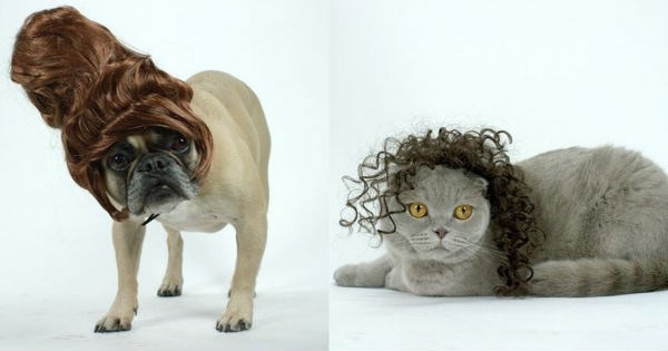 dogs pets wigs wig Cats hair - 1082117