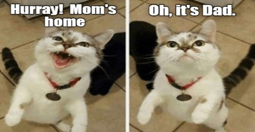 lolcats funny cat memes cats lol i can has cheezburger animals | Hurray! Mom's home Oh s Dad two pics of a cat standing on its hind legs in one it is happy and in the second grumpy