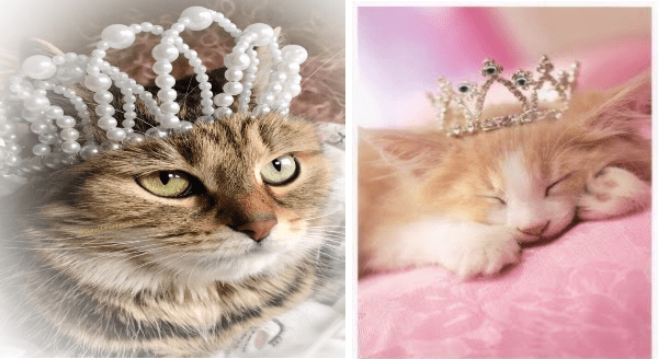 cat princesses with crown | cute grey cat wearing a tiara made of pearls | sleeping orange kitten on a pink pillow wearing a tiny bejeweled crown