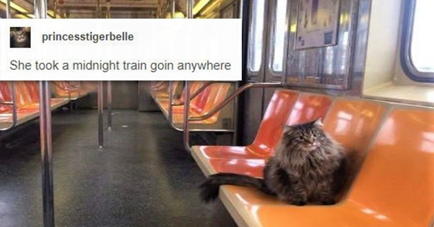 cats trains cute animals traveling cat aww transport journey discovery | catasters princesstigerbelle She took midnight train goin anywhere fuzzy fluffy grey cat sitting by itself on a plastic seat in an empty train