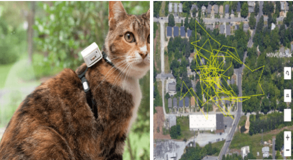 Cat Tracker Project Installed GPS Trackers On 900 Cats For a Week | cute orange brown and white cat wearing a harness with a white cubic camera mounted on its back | satellite photo birds eye view of a neighborhood city and yellow scribbles representing a cat's path