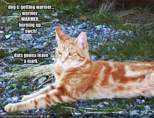 dog iz getting warmer    warmer    WARMER    burning up