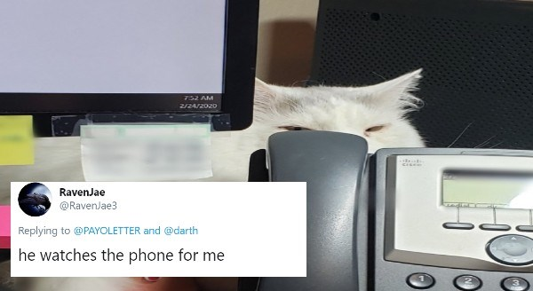 pet owners work from home with their pets | he watches the phone for me funny pic of a cat peeking from behind a computer screen and over a landline phone at the viewer