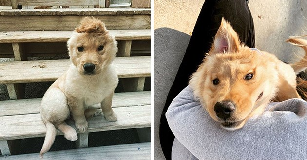 unicorn golden retriever ear aww cute animals adorable rae instagram | pics of a cute puppy with one ear the makes it look like a unicorn when it perks up