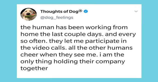 dog doggo thoughts tweets wholesome aww cute animals twitter quarantine uplifting | Thoughts Dog @dog_feelings human has been working home last couple days. and every so often. they let participate video calls. all other humans cheer they see am only thing holding their company together