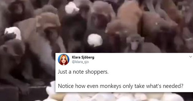 monkeys manners funny tweets viral video animals lol shopping | tweet by klara_sjo just a note shoppers notice how even monkeys only take what's needed?