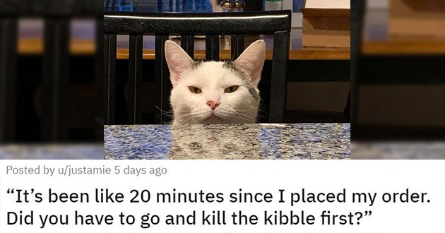 cats mourning funny cute loss heartwarming heartbreaking aww animals cat | It's been like 20 minutes since I placed my order. Did you have to go and kill the kibble first? cute pissed off cat sitting at a counter top