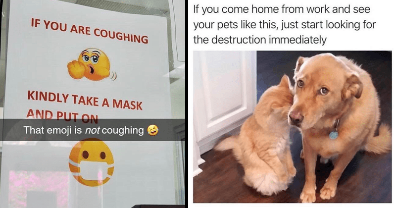 funny random memes, coronavirus memes, covid-19, dank memes, stupid memes, pet memes, cat memes, dog memes, pets, pet owners, funny tweets | IF ARE COUGHING KINDLY TAKE MASK AND PUT ON emoji is not coughing | If come home work and see pets like this, just start looking destruction immediately