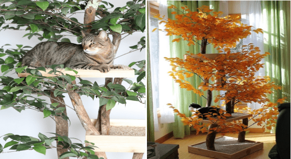 pet trees made of real trees | cat trees build inside actual living plants, cat sitting on a step surrounded by green leaves and another cat on the bottom shelf of an orange autumn themed cat tree