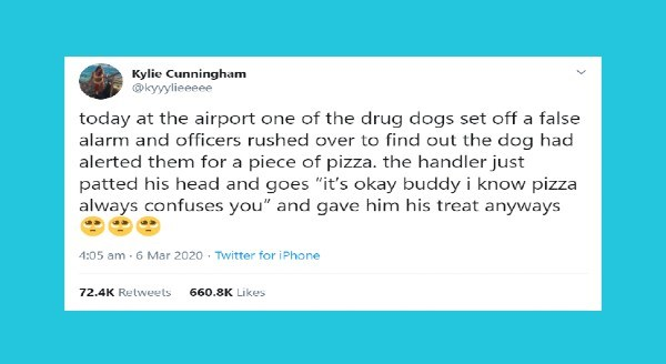 Funniest animal tweets | tweet by Kylie Cunningham @kyyylieeeee today at airport one drug dogs set off false alarm and officers rushed over find out dog had alerted them piece pizza handler just patted his head and goes s okay buddy know pizza always confuses and gave him his treat anyways 4:05 am 6 Mar 2020 Twitter iPhone 72.4K Retweets 660.8K Likes