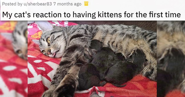 motherhood mothers animals aww cute funny lol love beautiful moms | posted by sherbear83 My cat's reaction to having kittens for the first time pic of an adult cat lying on her side with a derpy expression on her face while a littler of kittens nurse from her