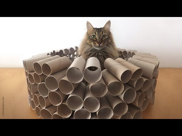 Cool DIY Projects You Can Do For Your Cat With All Those Toilet Paper Rolls | brown fuzzy furry cat sitting in the middle of a castle made from toilet paper rolls glued together to form a circular wall