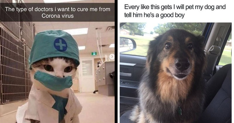 Funny and cute memes about animals | type doctors want cure Corona virus LG cat wearing scrubs and a face mask | Every like this gets will pet my dog and tell him he's good boy