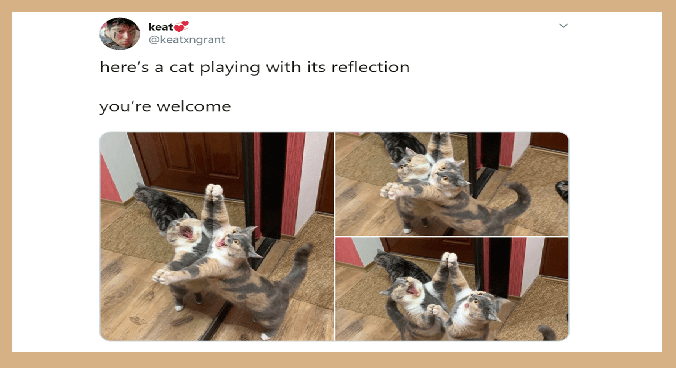 pets looking at their reflection | keat @keatxngrant here's cat playing with its reflection welcome funny pics of a calico cat standing up against a mirror with its front legs spread open