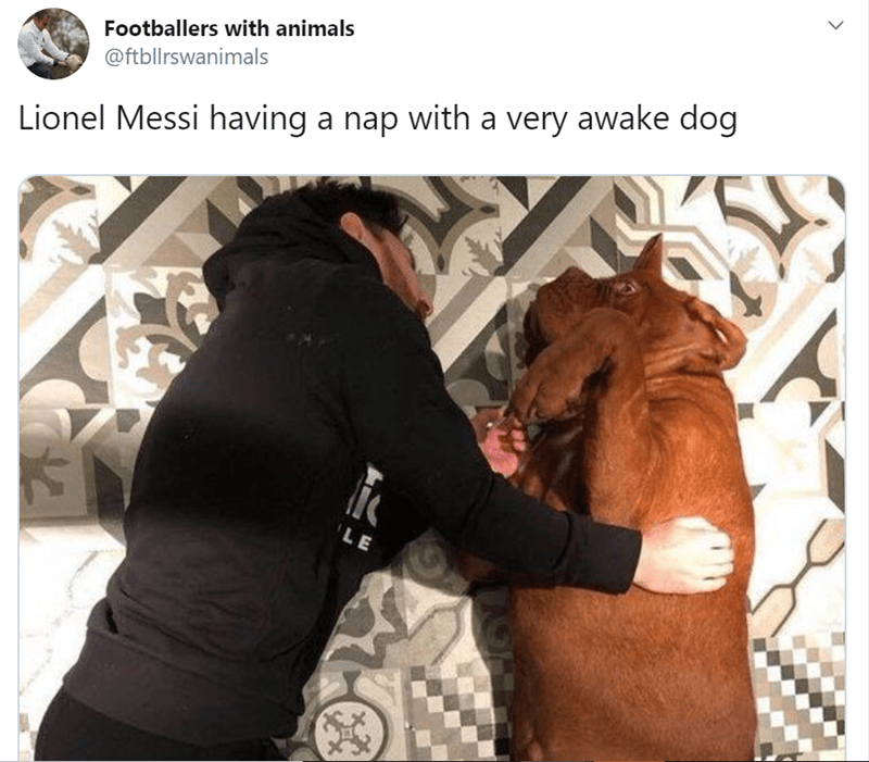 Footballers with their pets | tweet by Footballers with animals @ftbllrswanimals Lionel Messi having nap with very awake dog pic of a man in a black jacket lying next to a brown pit bull