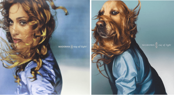 Dog recreats Madonna's iconic photos | MADONNA ray light album cover dog in a blue velvet shirt with flowing hair blowing in the wind