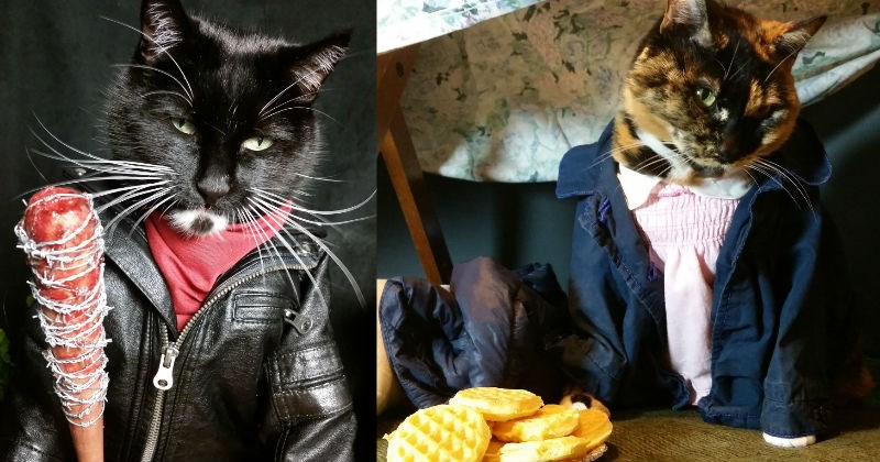 costume cosplay Cats