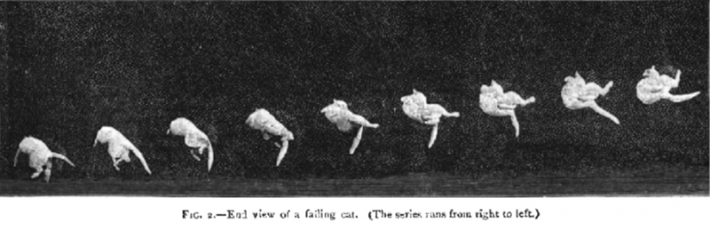 French Scientist Used Photography To Explain Why Cat Always Land On Its Feet | FIG. 2.-End view failing cat series runs right left. black and white series of pics of the progress of a cat turning during a fall