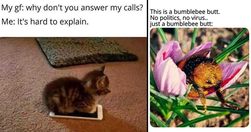 Funny random memes | My gf: why don't answer my calls s hard explain. kitten sitting on a phone | This is bumblebee butt. No politics, no virus just bumblebee butt: