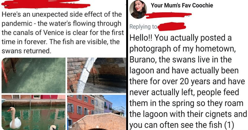 A collection of liars that got called out for trying to spread dishonesty | Here's an unexpected side effect pandemic water's flowing through canals Venice is clear first time forever fish are visible swans returned | Mum's Fav Coochie Replying Hello actually posted photograph my hometown, Burano swans live lagoon and have actually been there over 20 years and have never actually left, people feed them spring so they roam lagoon with their cignets and can often see fish (1)