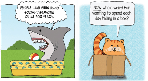 Animal comics | drawing illustration shark sitting in an inflatable kiddie pool PEOPLE HAVE BEEN USING SOCIAL DISTANCING ON YEARS | NOW who's weird wanting spend each day hiding box? INGWERSEN orange cat in a cardboard box