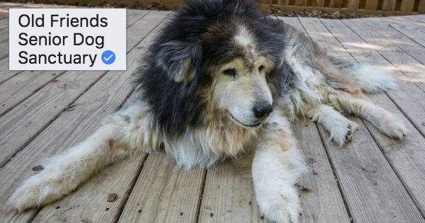 dogs seniors internet facebook Sanctuary - 1093637