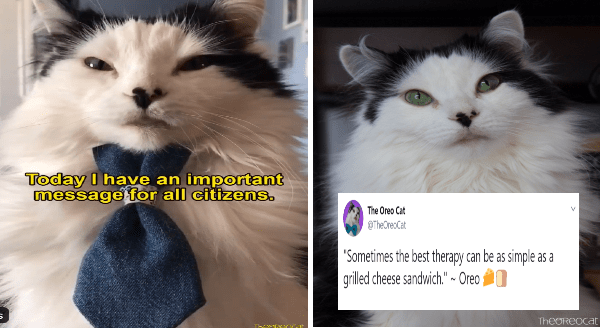 "The oreo cat is in quarantine | today i have an important message for all citizens cat wearing a necktie | Oreo Cat @TheOreoCat 18 Mar ""Sometimes best therapy can be as simple as grilled cheese sandwich Oreo #theoreocat #CatsOfTwitter #CatsOnTwitter #catlogic 8 27 35 214"
