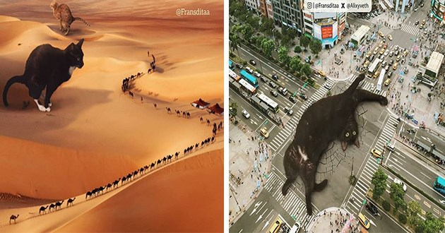 cats giant invasion pics lol cute aww funny animals instagram artist photoshop | two huge cats sitting on dunes in a dessert while a row of tiny people walks by | enormous cat stretching playfully in the middle of a busy intersection stopping all traffic