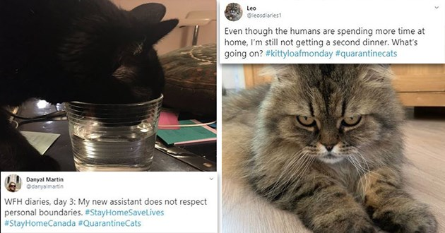 cats quarantine tweets funny best lol cute aww animals twitter | Danyal Martin @danyalmartin WFH diaries, day 3: My new assistant does not respect personal boundaries StayHomeSaveLives #StayHomeCanada #QuarantineCats 1:41 PM Mar 18, 2020 Twitter iPhone | Leo @leosdiaries1 Even though humans are spending more time at home still not getting second dinner s going on kittyloafmonday #quarantinecats 9:53 PM Mar 23, 2020 Birmingham, England Twitter iPhone