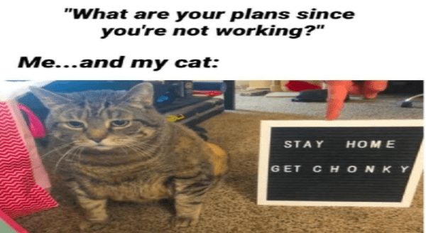 Chonky cats while in quarantine | are plans since not working and my cat: STAY HOME GET CHONKY chubby grey cat sitting next to a small sign