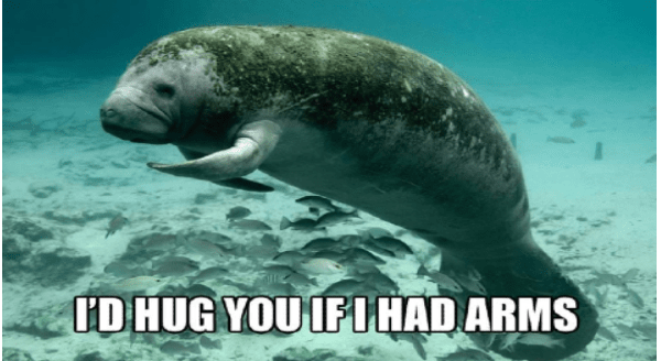 calming manatee memes | ID HUG IF I HAD ARMS cute manatee swimming underwater among small fish with its flippers curled in a hugging position