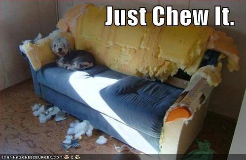 Cheezburger Image 1096484096
