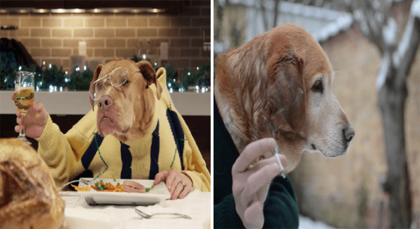 Funny photos of dogs with hands | a dog wearing glasses and a yellow jumper toasting with a glass of wine during dinner | dog looking serious dressed in a jacket and flicking a cigarette