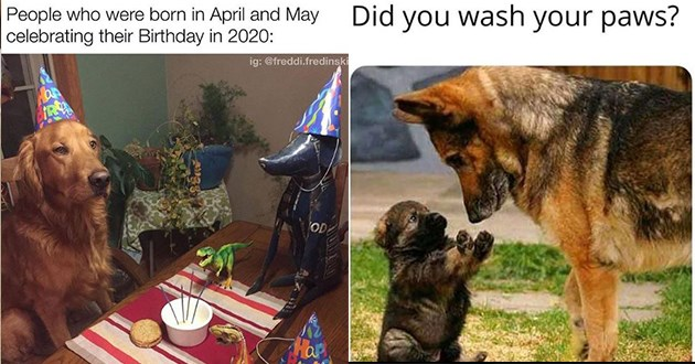 dogs doggo memes funny uplifting wholesome lol animals | golden retriever with a party hat celebrating alone People who were born April and May celebrating their Birthday 2020: ig freddi.fredinski OD Hap | german shepherd looking down at a chunky puppy holding its paws up Did wash paws?