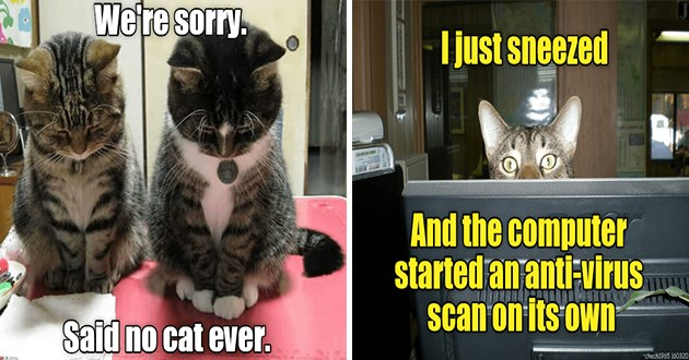 lolcats cats funny memes lol animals aww cute | two cats looking down in shame sorry. Said no cat ever. RY.COM | just sneezed .couTY And computer started an anti-virus scan on Its own chech1965 160320 cat peeking from under a desk