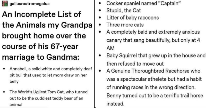 "Tumblr user shares an incomplete list of all the weird animals a grandpa brought home | gallusrostromegalus An Incomplete List Animals my Grandpa brought home over course his 67-year marriage Gandma Annabell solid white and completely deaf pit bull used let mom draw on her belly World's Ugliest Tom Cat, who turned out be cuddiest teddy bear an animal | Cocker spaniel named ""Captain"" Stupid Cat Litter baby raccoons Three more cats completely bald and extremely anxious canary sang beautifully, but"